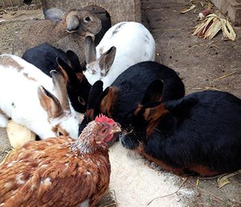 Tierfamilie-Hasen-1-350-300