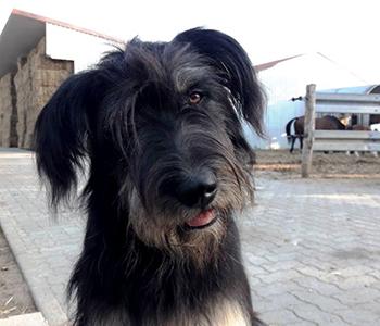 Tierfamilie-Hunde-1-350-300