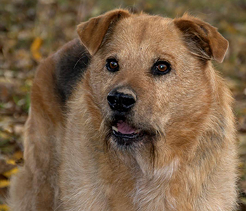 Tierfamilie-Hunde-2-350-300