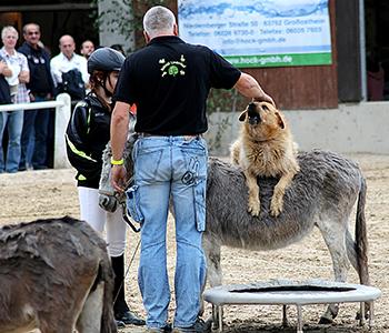 Tierfamilie-Hunde-4-350-300