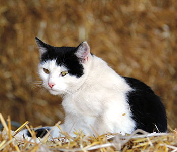 Tierfamilie-Katzen-1-350-300