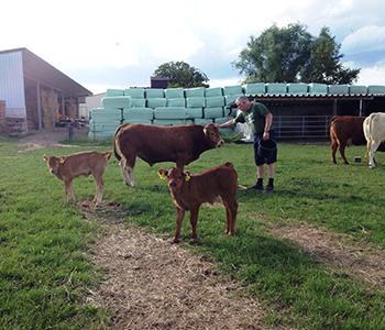 Tierfamilie-Kuh-2-350-300