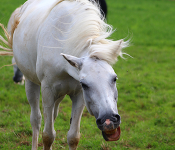 Tierfamilie-Pferde-1-350-300