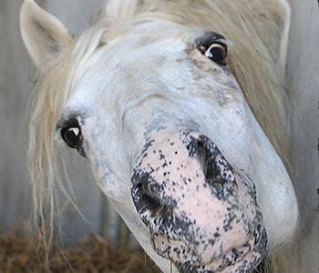 Tierfamilie-Pferde-6-350-300