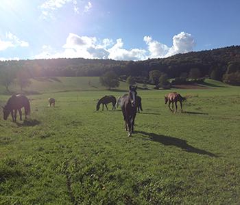 Tierfamilie-Pferde-7-350-300